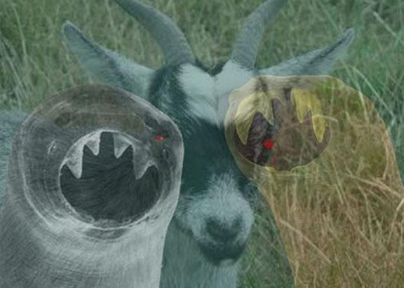 hookworms_goat